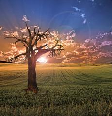 Old tree in sunset landscape