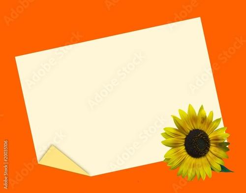Biglietti Matrimonio Girasoli : Quot biglietto con girasole sfondo arancio immagini e