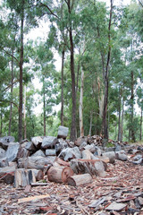 Pile of cut wood in forest