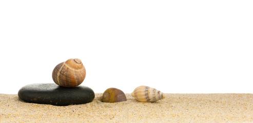 image de coquillages posés sur le sable à la plage et galet