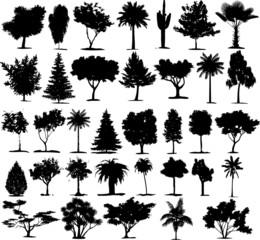 Beautiful Transparent Trees Vectors. 35 Plants