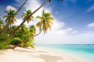 paradise caribbean beach