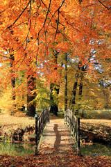 Photo sur Plexiglas Orange eclat Herbst 6