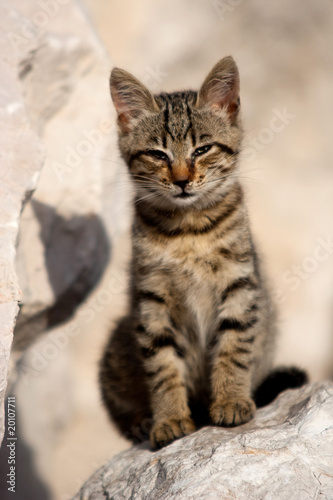 chaton europ en petit chat malade photo libre de droits sur la banque d 39 images. Black Bedroom Furniture Sets. Home Design Ideas