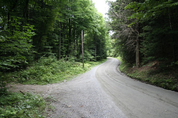 Dirt road winding through forest