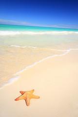 Sea star on tropical beach