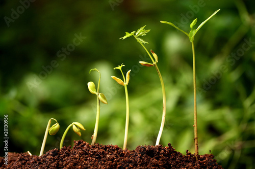 six seedlings growing from soil stock photo and royalty free images