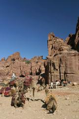 Les chameaux attendent les touristes