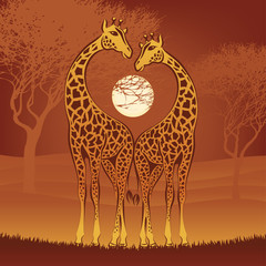 loving giraffes on african sunset, vector