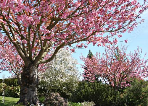 Paradise garden of summerville, georgia