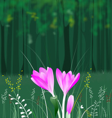 Crocus in the forest,illustration