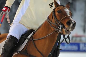 Polo Pferd