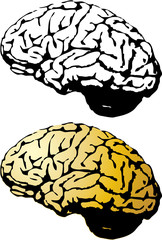 the vector human brain set