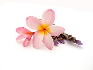 Fangipani mit Lavendel