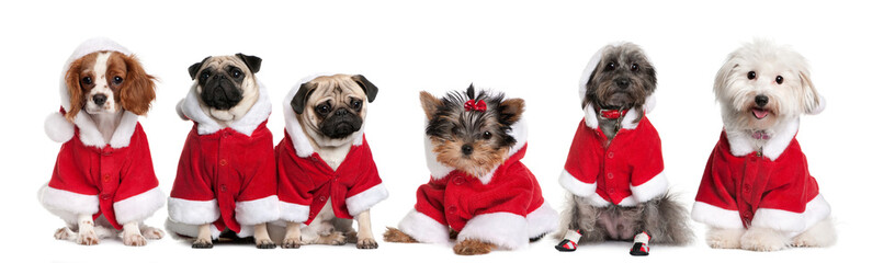 Group of dogs dressed as Santa Claus