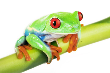 Frog on Bamboo