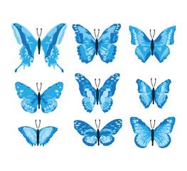Schmetterlinge / Butterfly blue edition