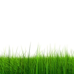 High resolution 3d green grass isolated on a white