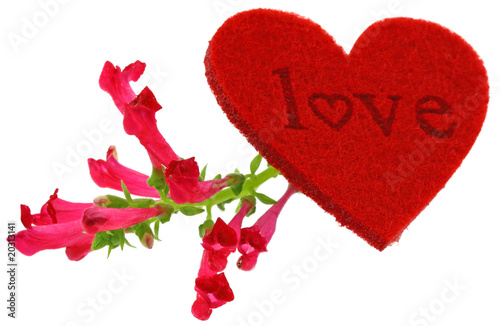 Love Coeur Fleur Rouge Fond Blanc Stock Photo And Royalty Free