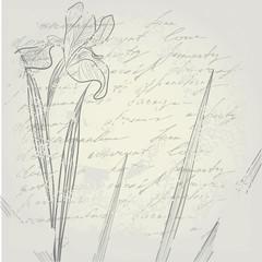 retro stylized background with Iris flower