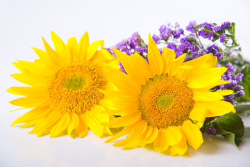 Sunflowers in studio