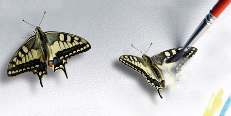 Creation: Butterfly being painted to life