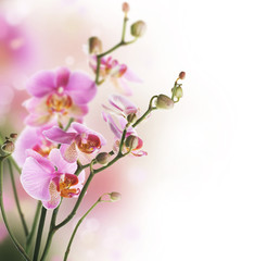Wall Mural - Beautiful Orchid border.Isolated on white.Selective focus