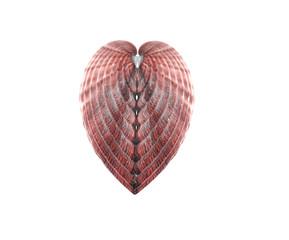 sea shell heart shape