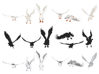 flying geese collection,  different color versions