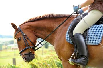 Pferde 107