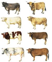 Photo sur Plexiglas Vache vaches