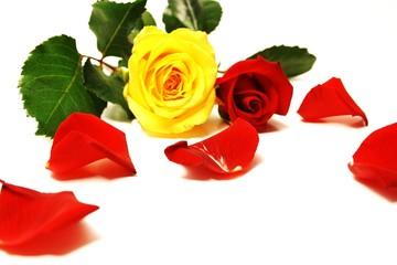 Rosen und Blüten