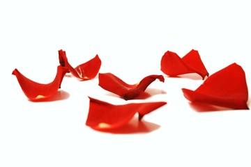 rote Blütenblätter