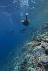 Divers swimming along the shallows of a coral reef