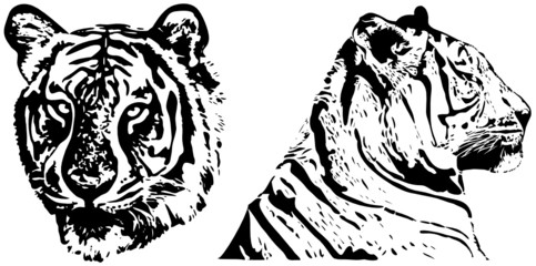 tiger - hand drawing