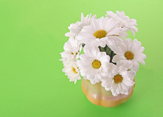 White camomile  bouquet on green background