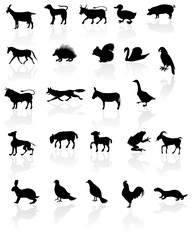 Animals with reflection on white background.