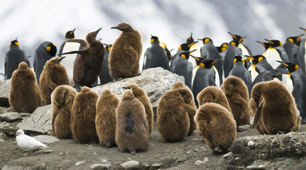 Penguin Squabble
