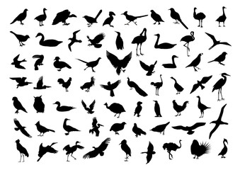Birds silhouettes isolated on white