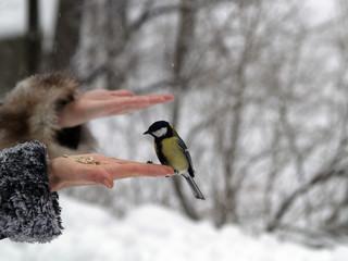 Titmouse bird in hand