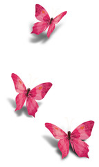 Three pink decorative paper butterflies isolated on white