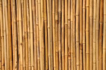 Bambus Trennwand
