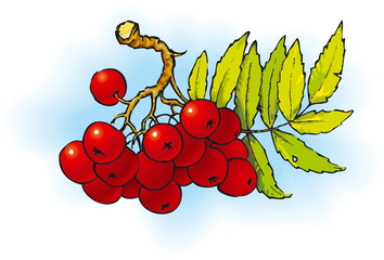 ashberry