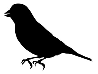 silhouette of greenfinch