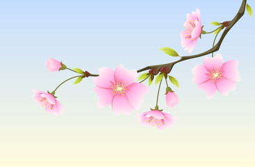 Hanami^ spring sakura