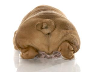 puppy buttocks