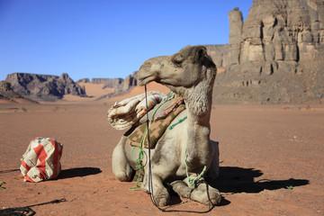 Libye, randonnée chamelière dans l'Akakus