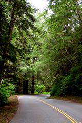 Asphalt road winding through forest