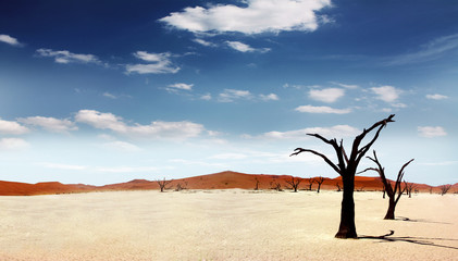 Photo sur Toile Desert de sable Einsame Wüste