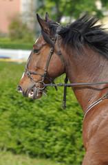 Running horse detail